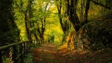 splendid-landscape_1575947[1]
